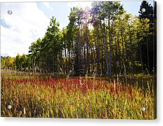 Blazing Red Grass In Colorado Acrylic Print