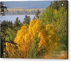 Blazing Yellow Acrylic Print by Leone Lund
