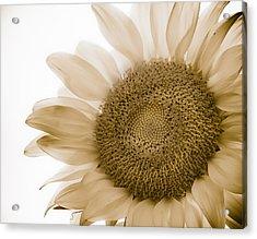 Bleached Sunflower Acrylic Print