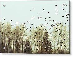 Bleak Mid-winter Acrylic Print by Rebecca Cozart
