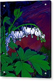 Acrylic Print featuring the photograph Bleeding Heart 1 by Pamela Cooper
