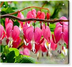Acrylic Print featuring the photograph Bleeding Heart Flowers by Kristen Fox