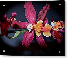 Blend Of Beauty Acrylic Print by Randy Rosenberger