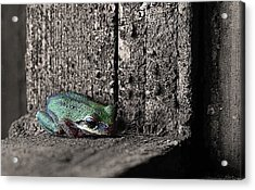 Blending In Acrylic Print by Angie Vogel