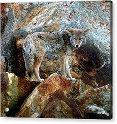Blending In Nature Acrylic Print by Karen Wiles