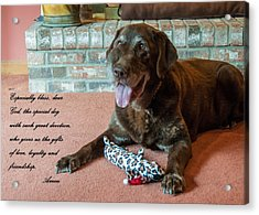 Bless This Dog Acrylic Print by Guy Whiteley