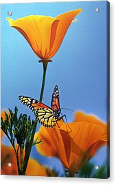 Blessed By The Sun Acrylic Print by Evie Cook