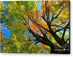 Blessings Above Acrylic Print