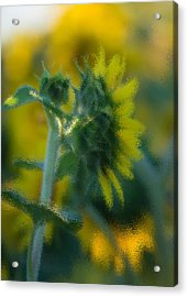 Bliss For Me Acrylic Print by Rima Biswas