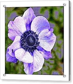 Bloem Acrylic Print