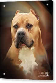 Blond Pit Bull By Spano Acrylic Print