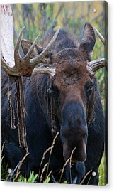Acrylic Print featuring the photograph Blood In His Eye by Jim Garrison