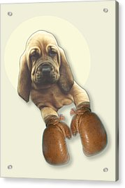 Bloodhound Boxer Acrylic Print by Jimmy Collins
