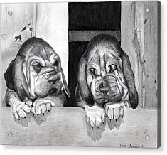 Bloodhound Puppies Dog Portrait  Acrylic Print by Olde Time  Mercantile