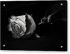 Bloodless Rose Acrylic Print