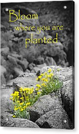 Bloom Where You Are Planted Acrylic Print