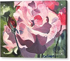 Bloomed Rose Acrylic Print