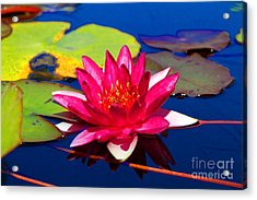 Blooming Lily Acrylic Print