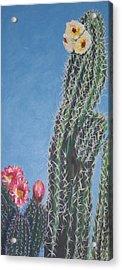 Bloomin Cactus Acrylic Print by Marcia Weller-Wenbert