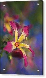 Bloomin Hong Kong Orchid Acrylic Print