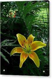 Bloomin Wonder Acrylic Print by Larry Jones