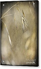 Acrylic Print featuring the photograph Blooming And Seeding by Chris Armytage