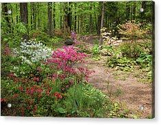 Blooming Azaleas At Azalea Path Acrylic Print by Panoramic Images