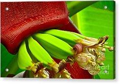Blooming Bananas Acrylic Print by Joy Hardee