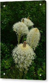 Blooming Bear Grass Acrylic Print