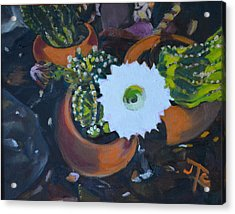 Blooming Cacti Acrylic Print by Julie Todd-Cundiff