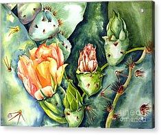 Blooming Cactus II Acrylic Print