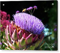 Blooming 'choke Acrylic Print by Kathy McClure