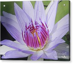 Acrylic Print featuring the photograph Blooming For You by Chrisann Ellis