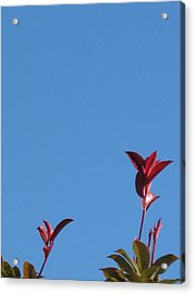 Blooming Leaves Acrylic Print
