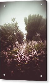 Blooming Rays  Acrylic Print
