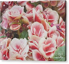 Blooming Roses Acrylic Print by Ivy Ho