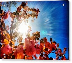 Blooming Sunlight Acrylic Print