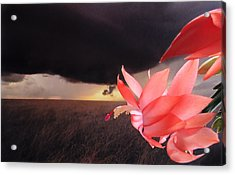 Acrylic Print featuring the photograph Blooms Against Tornado by Katie Wing Vigil