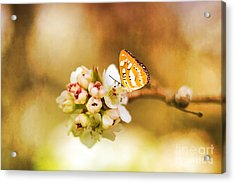 Blooms And Butterflies Acrylic Print by Darren Fisher