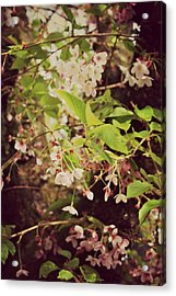 Blooms In The Branches Acrylic Print by Cathie Tyler