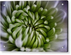 Blooms Of Green Acrylic Print by Mkaz Photography