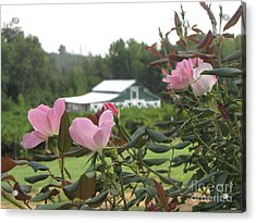 Blooms With The Barn Acrylic Print by Gayle Melges