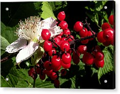 Blossom And Berries Acrylic Print