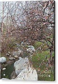 Blossom Brook Acrylic Print
