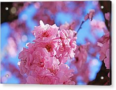 Blossom Flowers Trees Art Prints Acrylic Print by Baslee Troutman