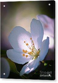 Blossom In The Sun Acrylic Print