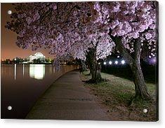 Blossom Night Fever Acrylic Print by Bernard Chen