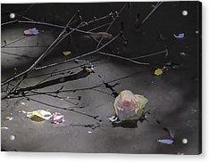 Blossom Rain 17 Acrylic Print by Georg Kickinger
