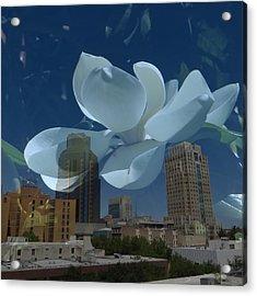 Blossom Rain 20 Acrylic Print by Georg Kickinger