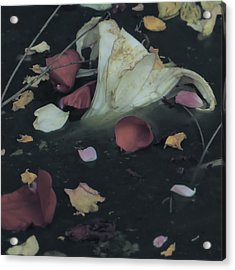 Blossom Rain 32 Acrylic Print by Georg Kickinger